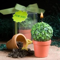 Candela a forma di vaso con piantina