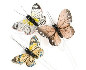 Farfalle marrone